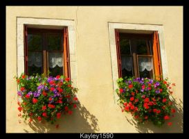Identical Windows by Kayley1590