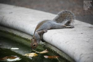 thirsty squirrel by Anar8Rita