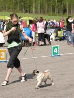 :Dog show- at the ring: by pimeydenmorsian