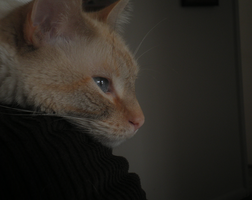 Waiting by Shiinsan23