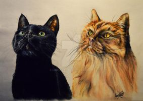 My lovely cats Kitty and Snor! by Lmk-Arts