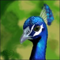 .:Peacock:. by Tifa22