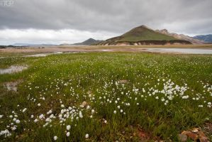 Iceland - eriophorum by RaumKraehe