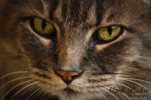 Eye of the Tiger by thephotographicgenus