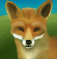 Fox by Idered