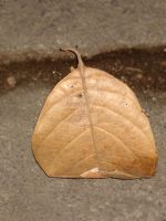 dried leaf lonely by yatoy