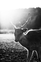 glowing deer iii by riskonelook