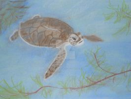 Sea Turtle by Miss-Whoa-Back-Off