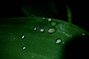 Waterdrops by Lilino