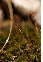 Sporophytes II by butterfly36rs