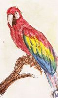 Parrot by erethusianelf