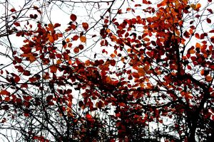 Autumn Reds by Living-Life-Loud
