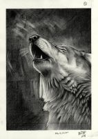 cry wolf by no-life94