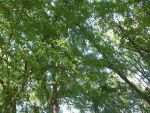 The Canopy by Cylessio