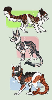 Cat Auctions | CLOSED by DaisiesAdopts