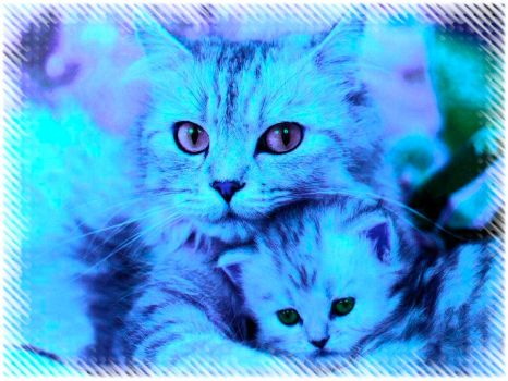 Cat and Kitten by Easyshare5