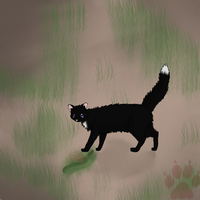 .:Warriors:. Ravenpaw and his catch w. Speedpaint by MichelleTheCat