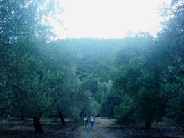 Fields of Olive Trees by ISIK5