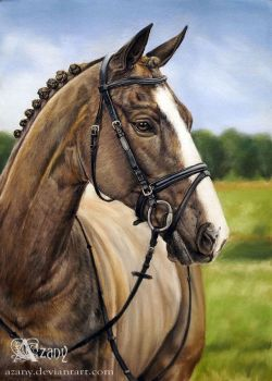 Horse portrait by Azany