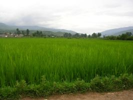 Field in Rural China by johnyquest31