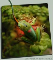 ID Costarricenses by Costarricenses