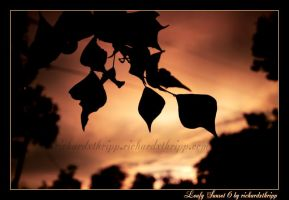 Leafy Sunset 6 by richardxthripp