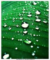 Dew by krishnachandranu