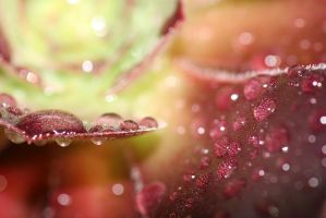 Macro Plant by beccyboo-412