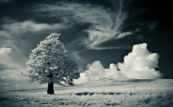 The tree - IR photo III by rott-man