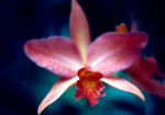 Orchid 2 by baruch60610