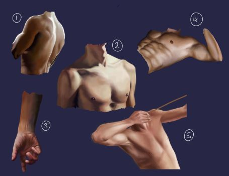 Male Anatomy Practice 1 by nepterine7