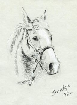 Horse Portrait on toned paper by SmudgeDragon