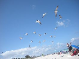 Flock of Seagulls by roxas431