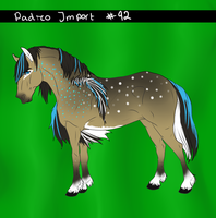 Padro Import 92 - Point Bid by xTrippingOnYoux