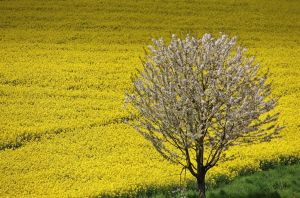 spring time by Dieffi