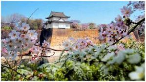 Cherry Blossom Osaka Castle Japan by zeronemike