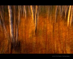 Golden Forest by uberfischer