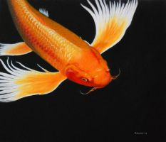 Coy Koi by mikesblender