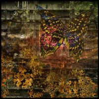 Ab10 Again Butterfly by Xantipa2-2D3DPhotoM