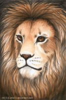 Portrait of a Lion by afke11
