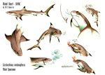 Blacktip Reef Shark - Sheet Siarc by Culpeo-Fox