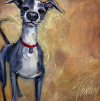 Italian Greyhound by 100LASHES