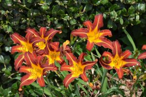 Blooms 6-25-12 by Tailgun2009