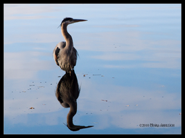 Heron Mirrored by Mogrianne