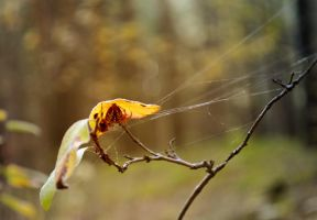 a large spider by Tumana-stock