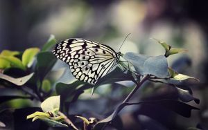 small beauty -wallpaper- by fluentwater
