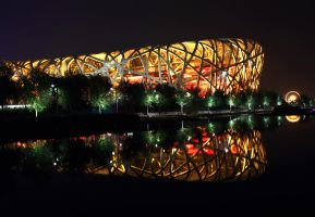 The Color of Night Bird Nest by carlos170691
