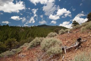 Mt. Rose from Whites Creek by madrush08
