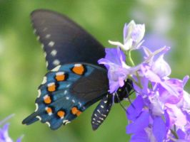 Butterfly on larkspur1 by grlgeorge