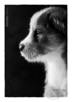 I Love Puppy by ijographicz